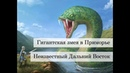 О гигантской змее в Приморском крае от Валерия Двужильного
