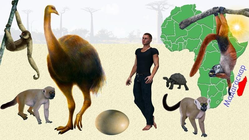 Голоценовая мегафауна Мадагаскара и косвенные свидетельства раннего заселения острова людьми