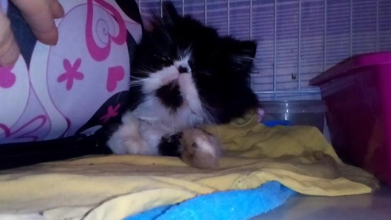 Очередной отказник, кошка из-за стресса не ест, кормим силком.