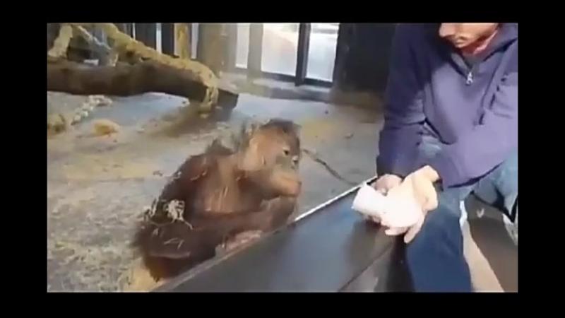 Фокус, обезьяну рассмешили .Юмор.Прикол.