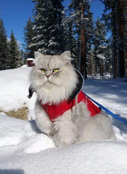 Кот из большое путешествие