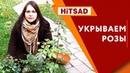 Как правильно укрыть Розу 🌹 Видео Советы садоводам от Хитсад