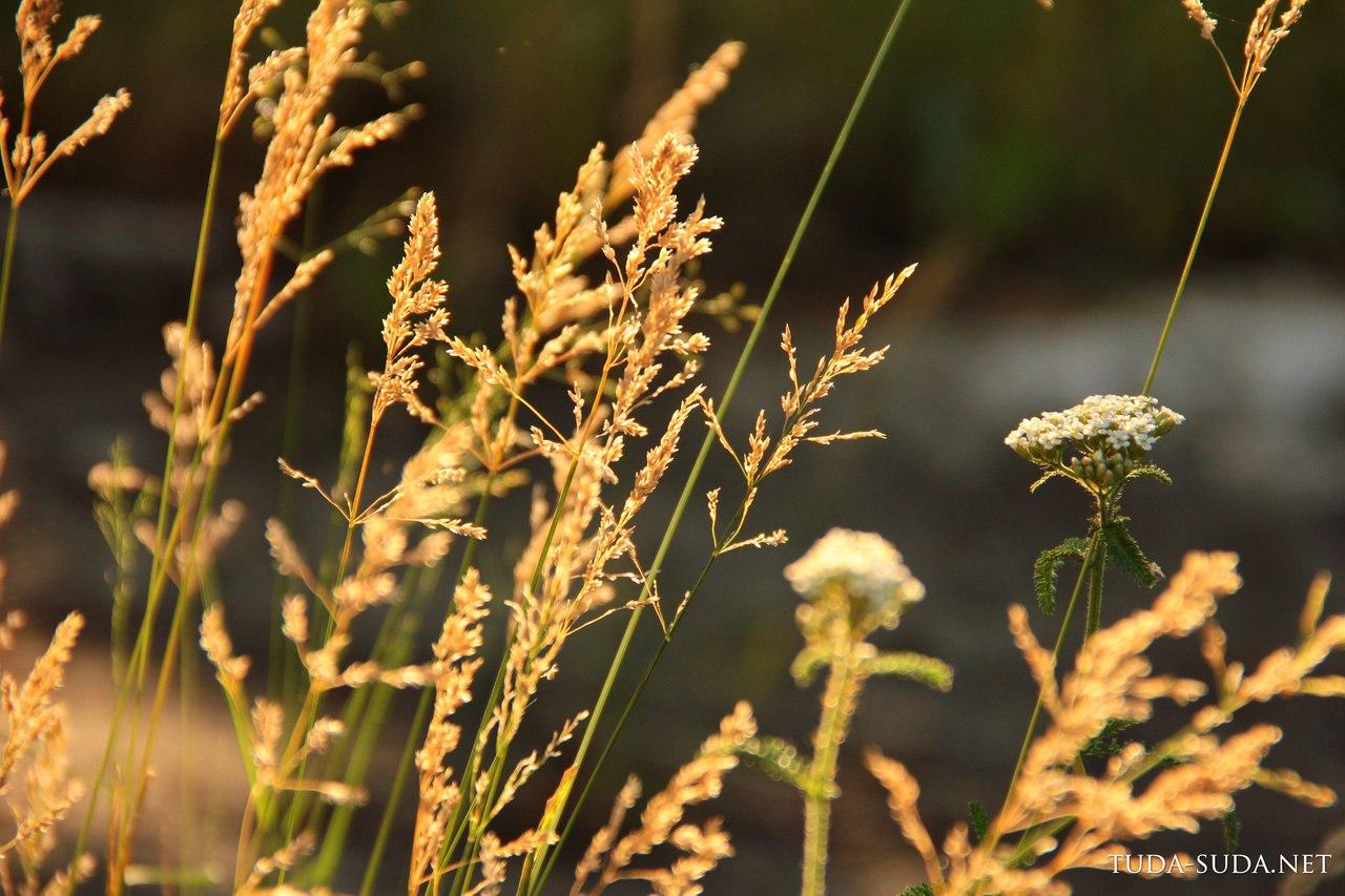 Закат в траве