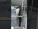 Un oiseau se balance sur un bateau