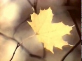 Нани Брегвадзе - Жёлтый лист