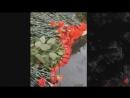 Стас Коноплянников • Памяти бойцов 6-ой парашютно-десантной роты 104-го гв.ПДП 76-ой гв.Черниговской Краснознамённой ВДД