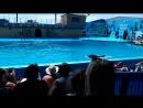 Дельфинарий Архипо-осиповка