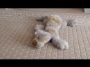 Break - Cute Squirrel Goes Nutty for Toy