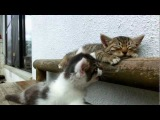 Кот, котик, котёнок, мило, смешно, сон, спит, соня, сонный, уруру, ахахах, до слёз :)