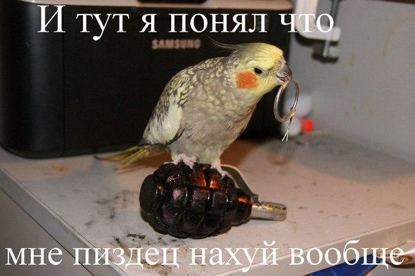 http://cs14101.userapi.com/c7007/v7007141/f21/nztsD83uvYE.jpg