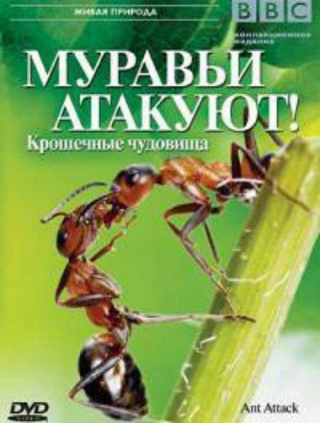 Самые смертоносные насекомые: Муравьи Убийцы