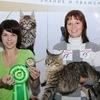 SANATACUN-питомник кошек породы мейн-кун