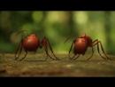 Minuscule, la vida privada de los insectos (17) - Hélène Giraud, Thomas Szabo (2013).
