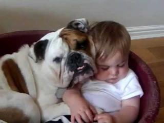 Бульдог замер чтобы не разбудить ребёнка / Bulldog stopped so as not to wake the baby