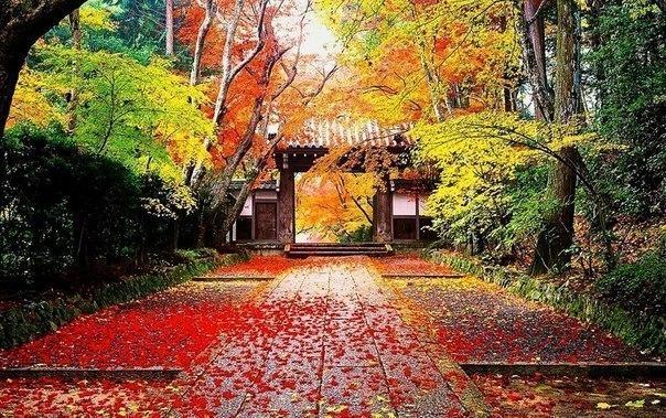 Осень в Японии.