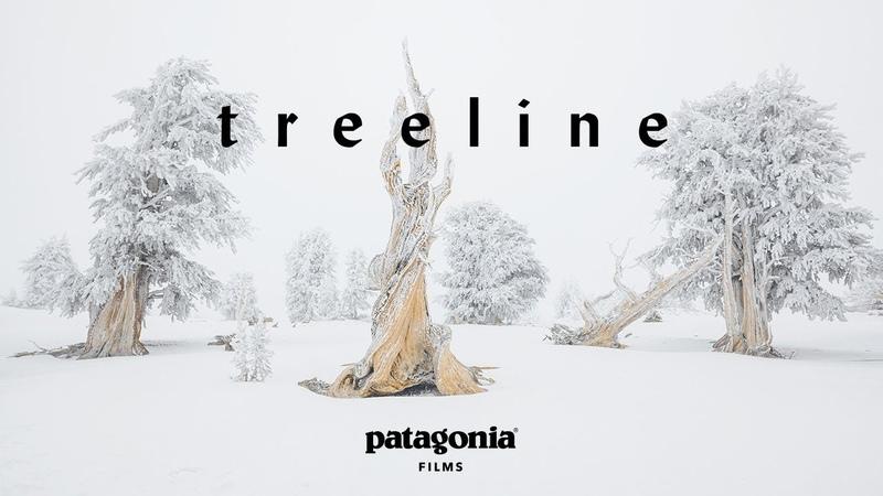 Treeline Trailer (2018)
