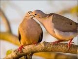 Егор Летов - Над землей много разных птиц.