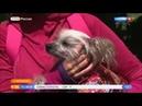 Утро России Эфир от 08 06 2018 Велосипедист путешествует с собакой Вести 24