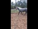 Конные прогулки, фотосессии г. Железнодорожный — Live
