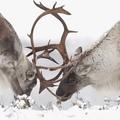 @live_love_wildlife on Instagram . Todays Theme VIDEO