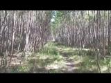 Путь к Роднику (Семь ручьев),Святой источник Пантелеимона.