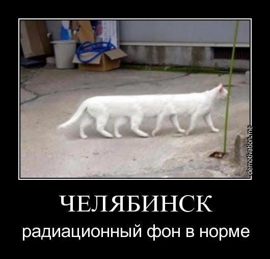 фото приколы самые смешные кошки