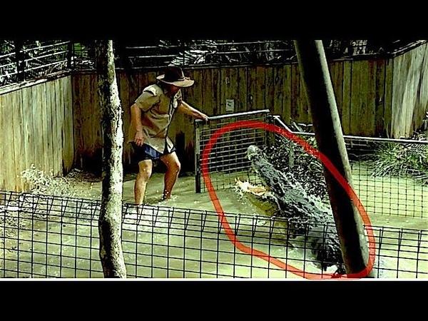 Как не быть Съеденным Крокодилом / Crocodile Attack Show