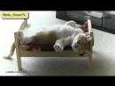 Кот поиграл и спит у себя в кроватке, прикольная у него кроватка