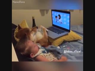 вот для чего нужна собака ребёнку