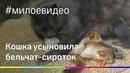 Кошка усыновила бельчат и воспитывает их вместе с котятами
