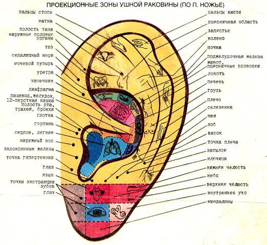 Массаж ушей (1 фото)