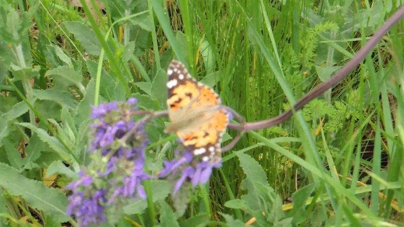 Раскусил пчел Источник ярко оранжевой пыльцы определен