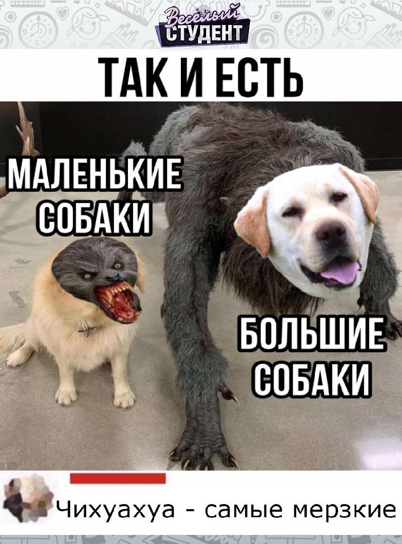 Все собаки по своему хороши.????