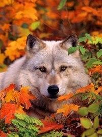 Отцвели цветы, падают листья, птицы молчат, лес пустеет и затихает.ОСЕНЬ. - Страница 6 NA7S-zX6zOQ