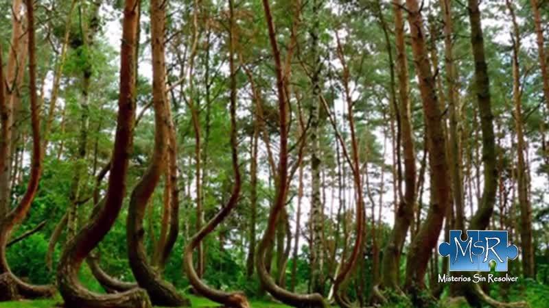 In diesem Wald passiert etwas sehr seltsames Verborgene Geheimnisse TV