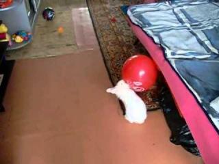 Кролик доигрался  и дал деру с воздушным шариком