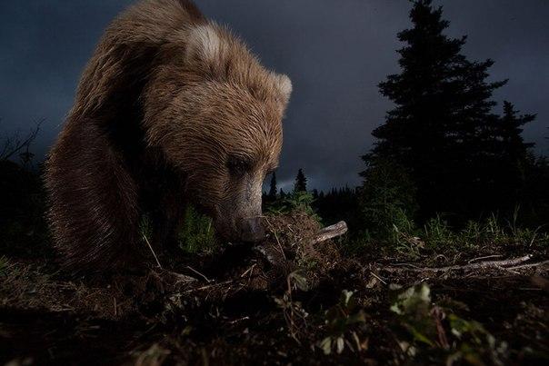 Фотоконкурс National Geographic: победители 2012 года