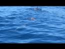 Игривые дельфины и черепаха 🐢 🐬 в открытом океане
