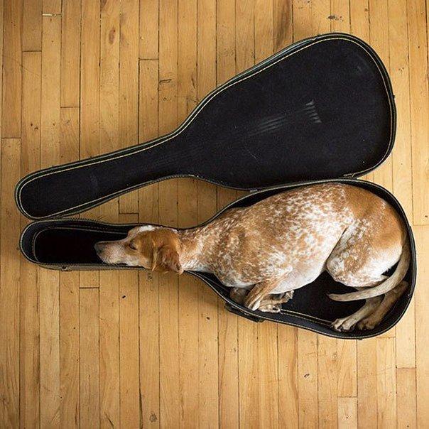 Спит на сеновале с распахнутой пиздой 6 фотография