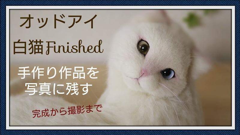 羊毛フェルト オッドアイ 猫 完成から撮影まで How To Make Needlefelting Odd eyes Cat Doll Finished