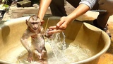 DD19 P2 Take A Bath For Poor Baby Axel, Monkey Axel Crying When Take A Bath