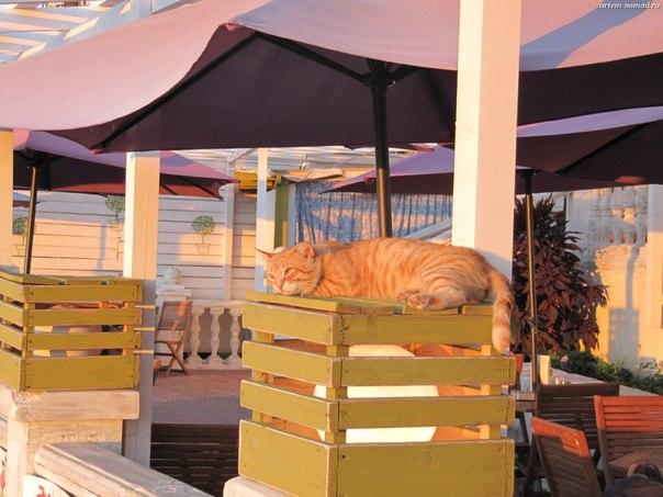 Кот на Балконе