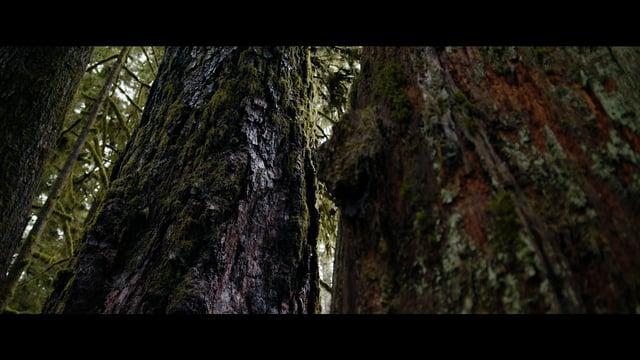 Blackmagic Ursa Mini Pro - Temperate Rainforest Footage