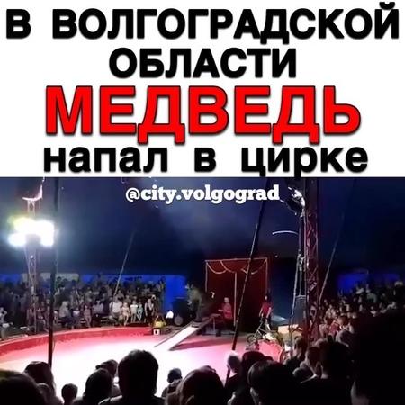 """ВОЛГОГРАД 📍 VOLGOGRAD on Instagram """"В Волгоградской области медведь напал на дрессировщика во время выступления в шапито.  @city.volgograd"""""""