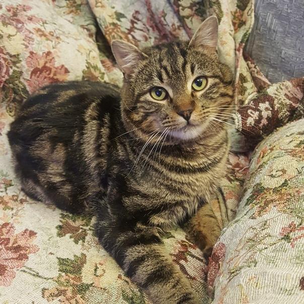 Ищет дом котик Марсель
