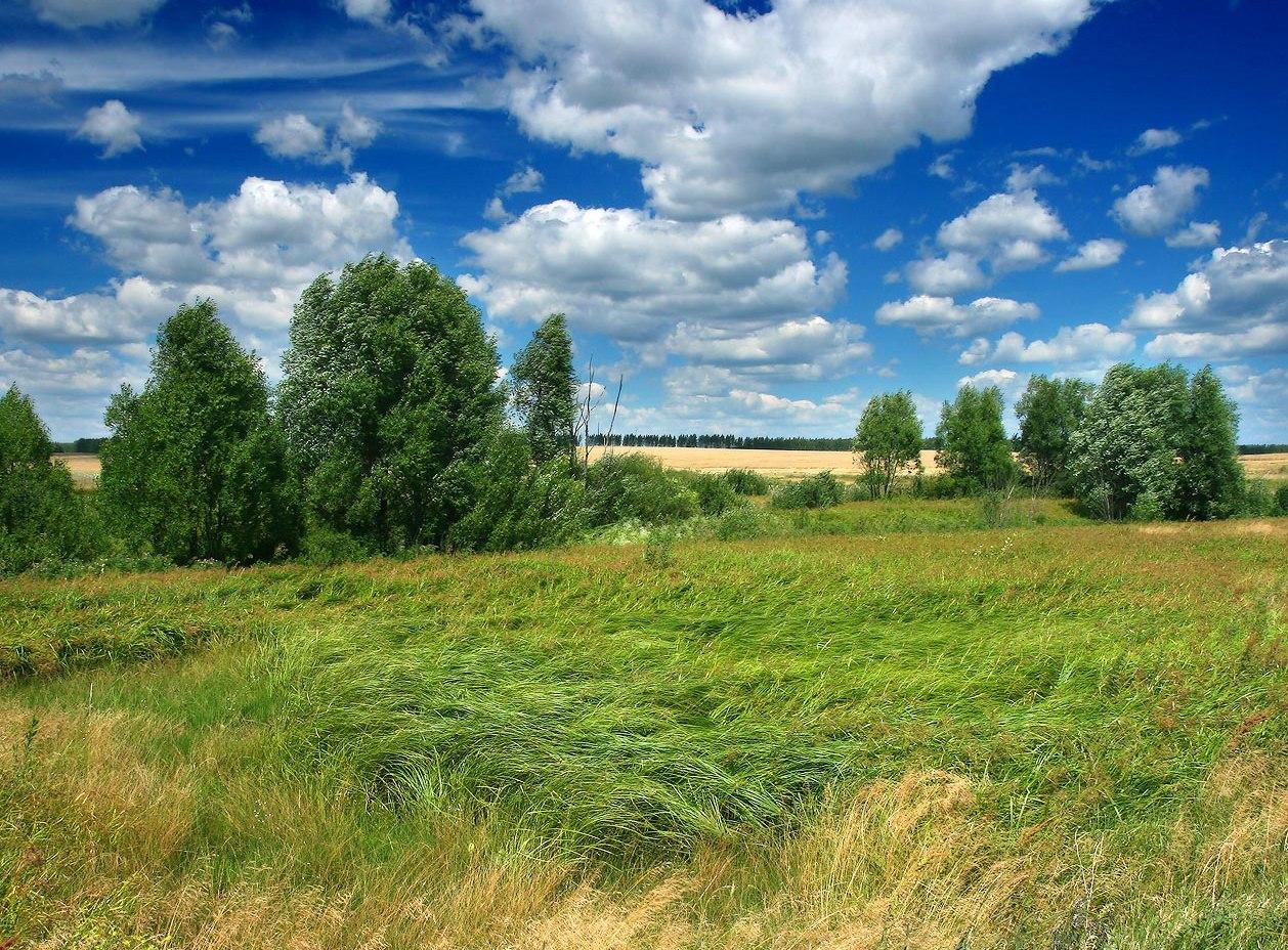 Многодетные семьи Неклиновского района получают земельные участки