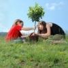 Посади своё дерево в слове Любовь!
