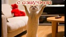 Приколы с котами и смешная ОЗВУЧКА котов и кошек – РЖАКА ДО СЛЁЗ от PSO