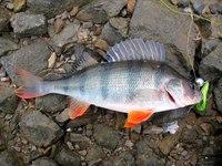 20 апреля 2007 11:06.  Мартыновском районе Ростовской области на реке Сал зарегистрирована массовая гибель рыбы.
