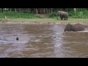 Слоненок спасает человека